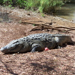 Le Lac Sacré d'Antanavo -- Peuplé de crocodiles, près du village d'Anivorano, le Lac Sacré est à près de 70 km de Diego.
