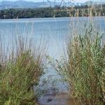Le Lac Sacré d'Antanavo -- Seules les femmes et les enfants ont le droit d'aller sur le Lac Sacré pour pêcher. Beaucoup de lacs malgaches sont infestés de crocodiles.