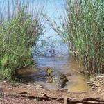 Le Lac Sacré d'Antanavo -- Le Lac Sacré peuplé de crocodiles, près du village d'Anivorano.