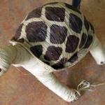 Artisanat du raphia -- Représentation artisanale de la tortue radiée.