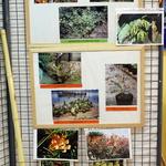 Flore -- <p> Ylang-ylang, plante crevettes (un bouquet), sabot de Vénus, ...</p>