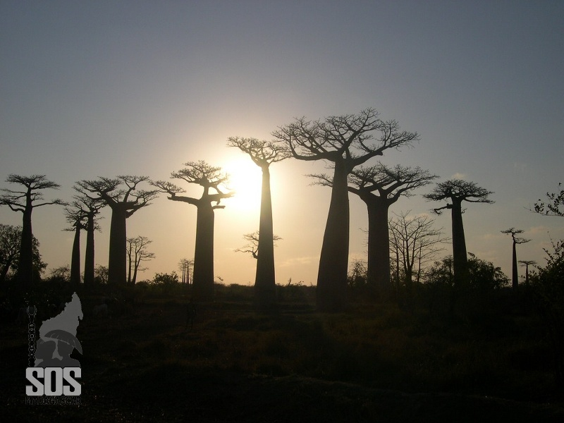 COUCHERDESOLEIL1-PISTEDEMORONDAVA.jpg