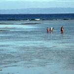 Saint-Mariens -- À la pêche de bon matin