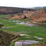 SOS Madagascar 2014 11 4742 -- <p> La riziculture jalonne les méandres de la RN7</p>