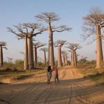 Morondava