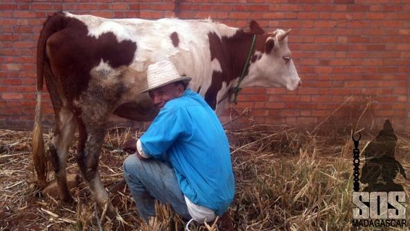 Mise bas prochaine et bientôt du lait pour les enfants.