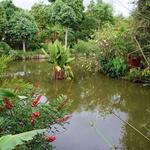 """SOS Madagascar 2014 11 4876 -- Au jardin des """"Chambres du Voyageur"""""""